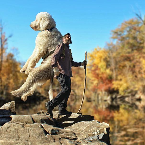 dog-giant-roams-streets-photoshop-juji-christopher-cline-8