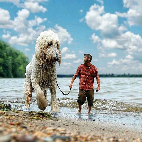 dog-giant-roams-streets-photoshop-juji-christopher-cline-9