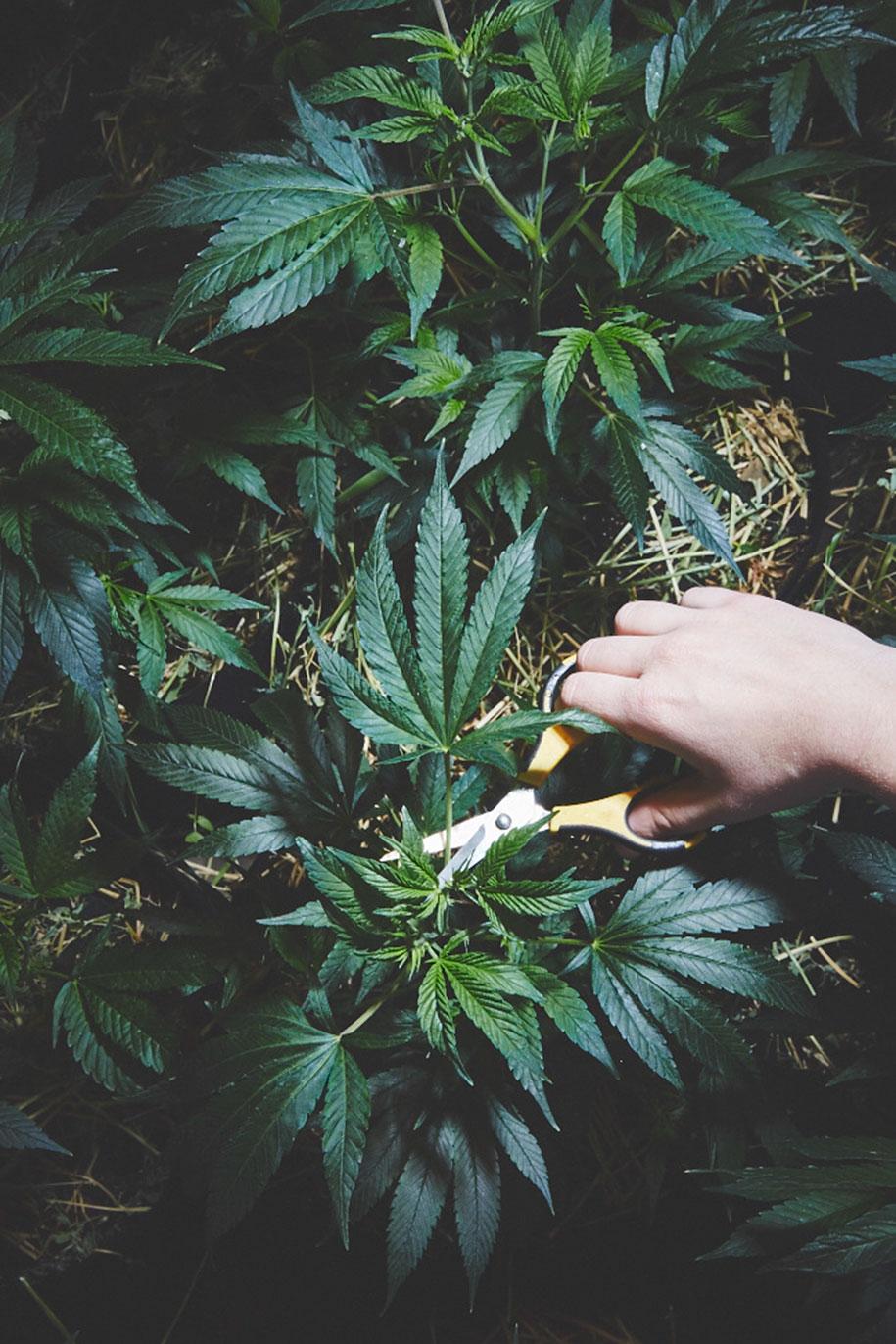 marijuana-horticulture-sisters-of-the-valley-shaughn-crawford-john-dubois-21