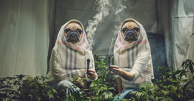 Weed Smoking Nuns Get Hilariously Photoshopped 10 Pics