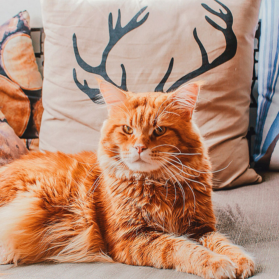 Cutlet The Cat Poses For His Personal Human Photographer