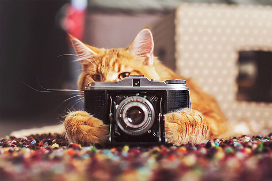 Cutlet The Cat Poses For His Personal Human Photographer ...