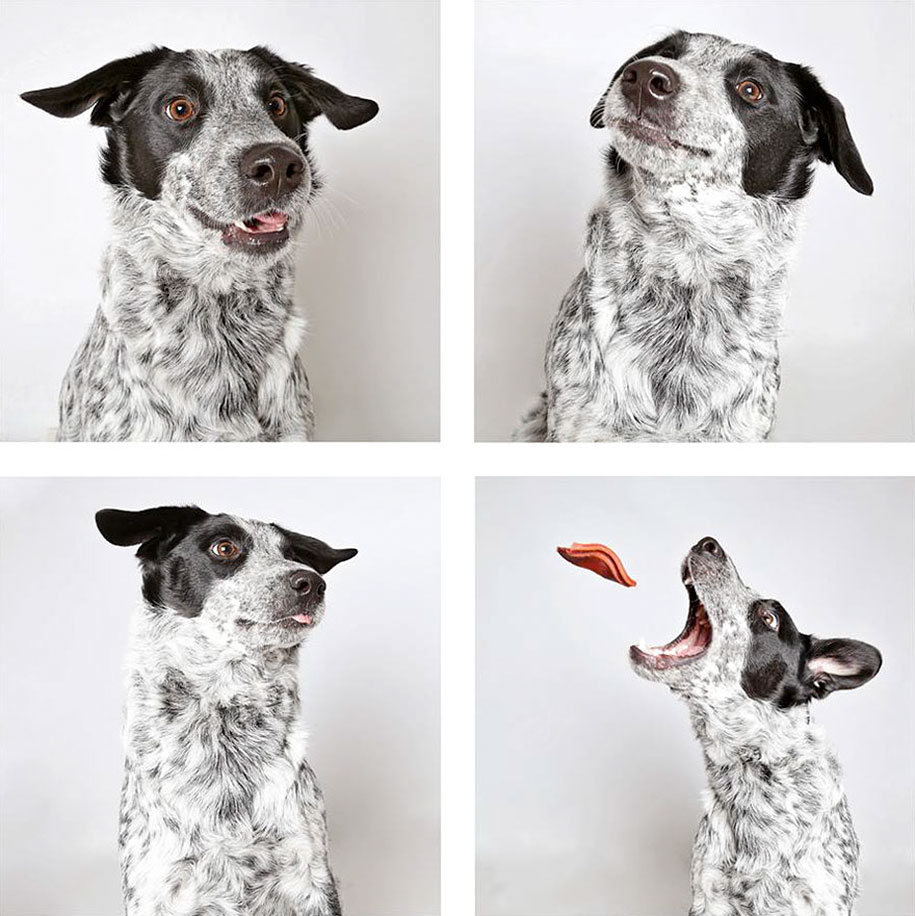shelter-dogs-adopt-photo-project-humane-society-2