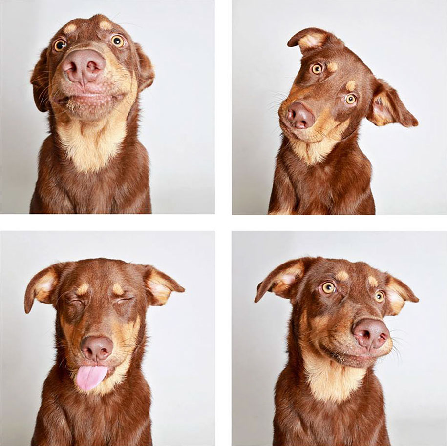 shelter-dogs-adopt-photo-project-humane-society-4