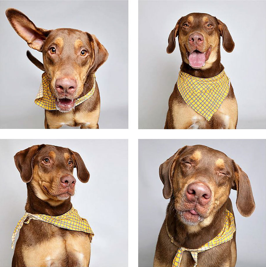 shelter-dogs-adopt-photo-project-humane-society-7