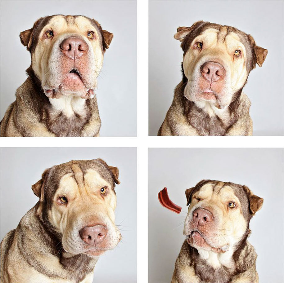 shelter-dogs-adopt-photo-project-humane-society-8