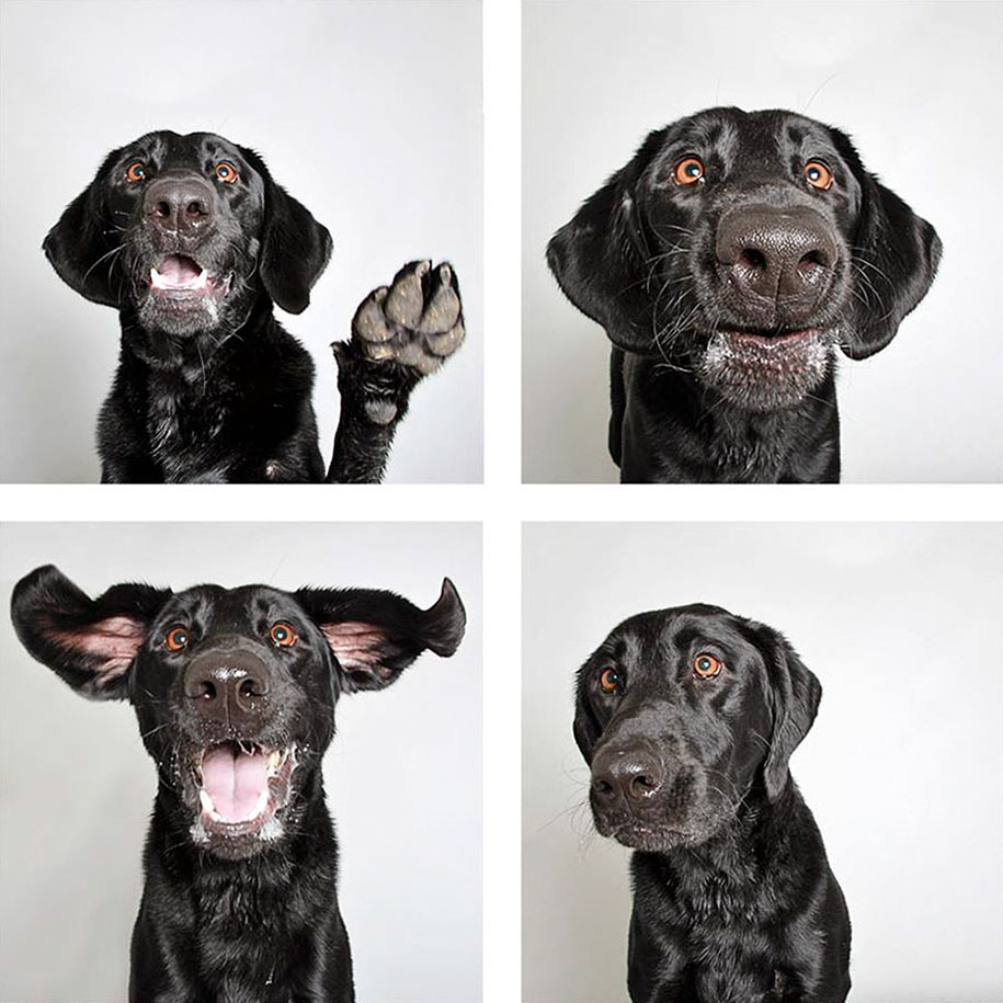shelter-dogs-adopt-photo-project-humane-society-9