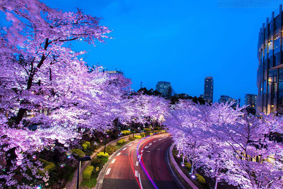spring-colors-japan-cherry-blossoms-national-geographic-1