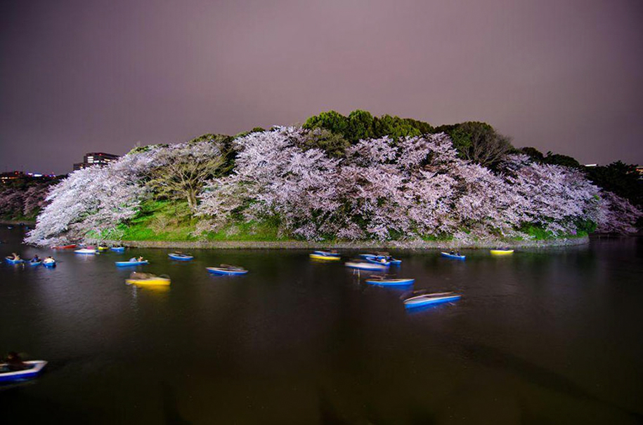 spring-colors-japan-cherry-blossoms-national-geographic-10