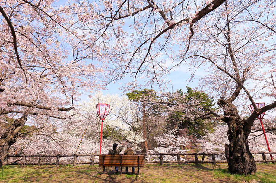 spring-colors-japan-cherry-blossoms-national-geographic-13