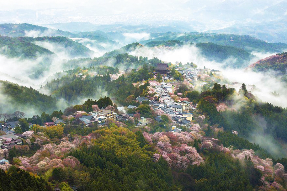 spring-colors-japan-cherry-blossoms-national-geographic-4