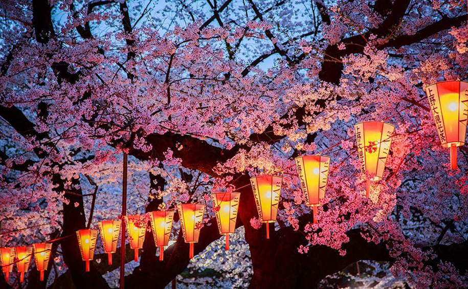 spring-colors-japan-cherry-blossoms-national-geographic-7