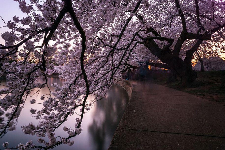 spring-colors-japan-cherry-blossoms-national-geographic-8