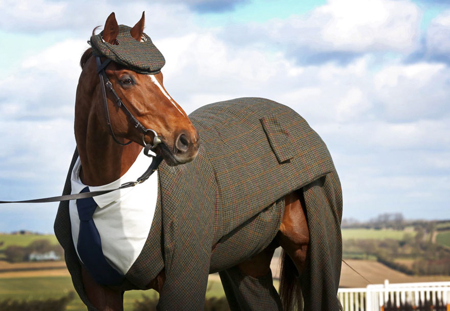 three-piece-suit-for-classy-horse-emma-sandham-king-4