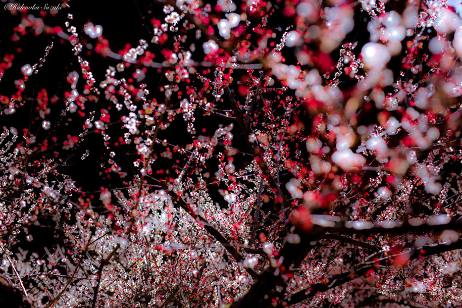 trees-blooming-spring-in-japan-hidenobu-suzuki -16