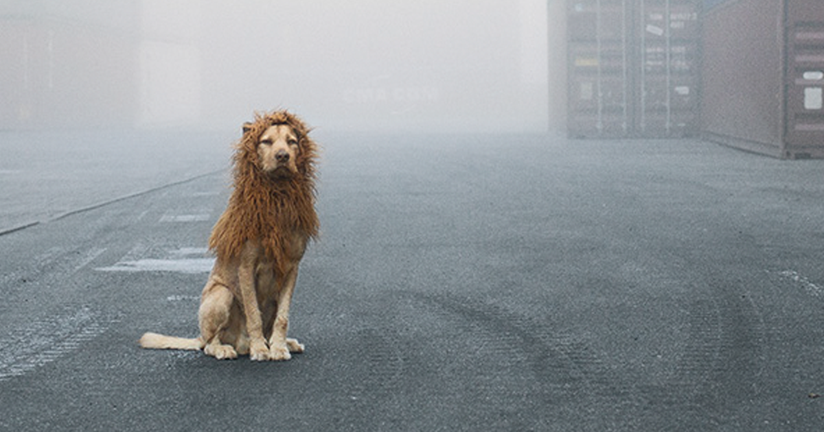 Photographer Shoots Angry Lion Pic Moments Before It Jumped To - Photographer captures angry lion before attack