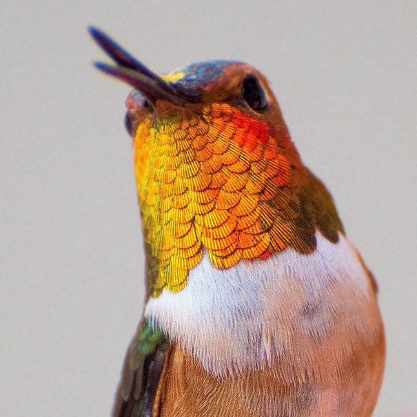 hummingbird-closeup-photography-tracy-johnson-california-3