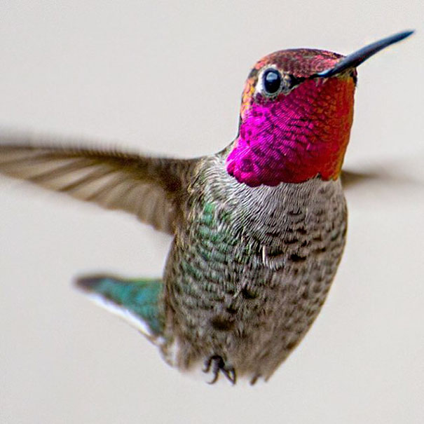 Photographer Captures Close Ups Of Hummingbirds Beauty In