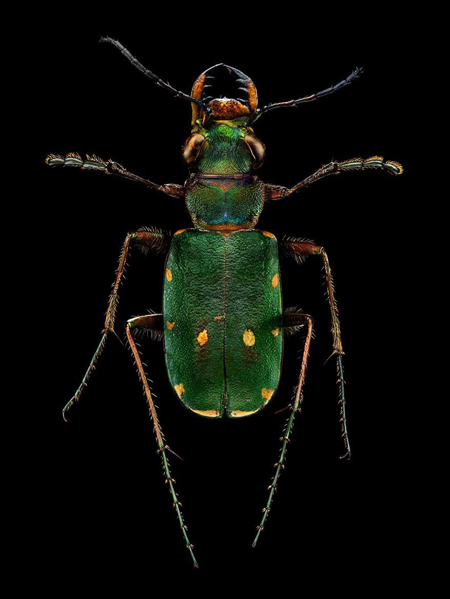 macro-insect-photos-made-10k-images-levon-biss-1