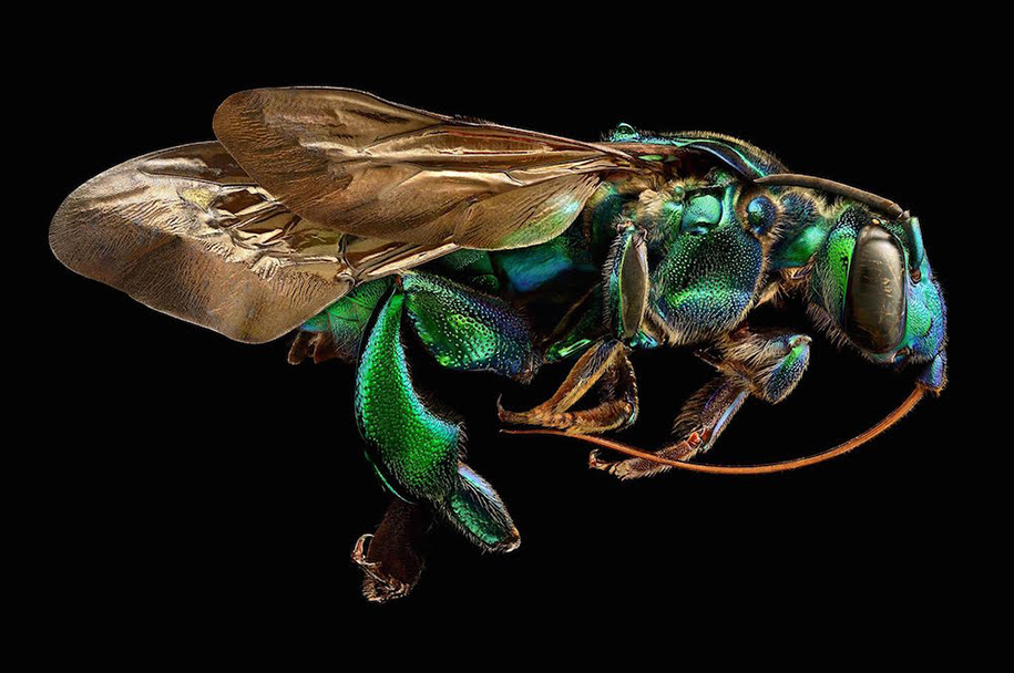 macro-insect-photos-made-10k-images-levon-biss-5