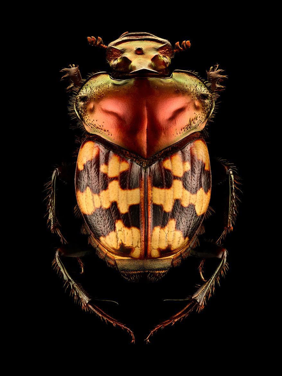 macro-insect-photos-made-10k-images-levon-biss-6