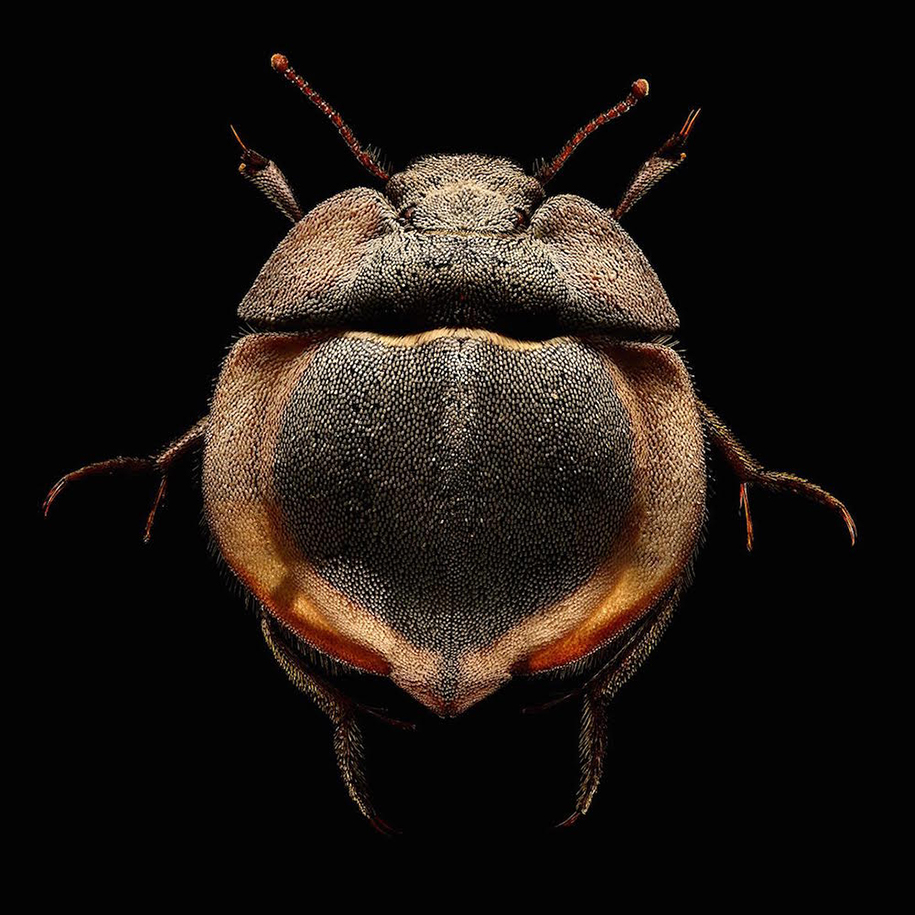 macro-insect-photos-made-10k-images-levon-biss-8