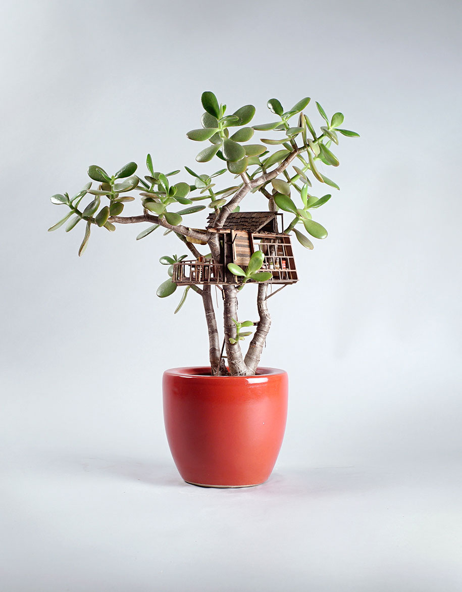 miniature-treehouse-houseplants-jedediah-corwyn-voltz-17