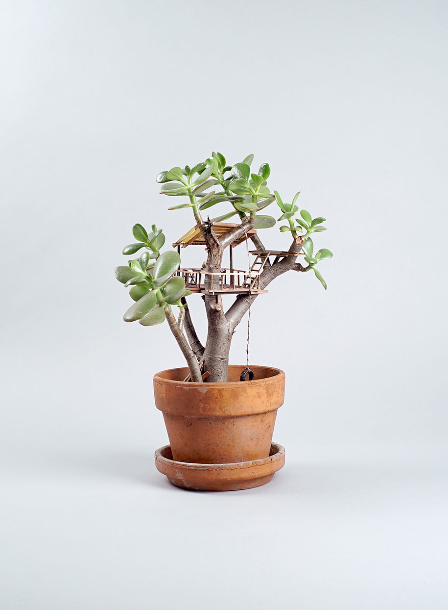miniature-treehouse-houseplants-jedediah-corwyn-voltz-23
