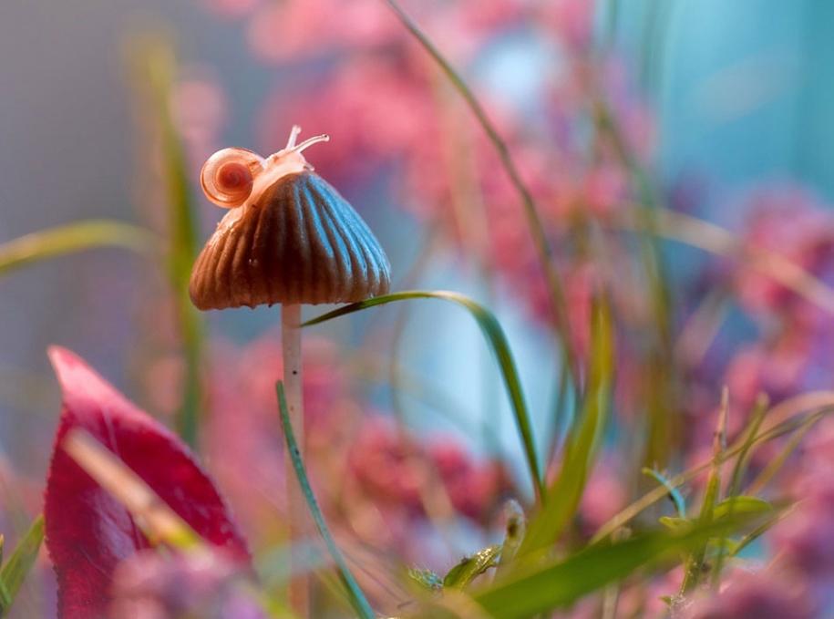 nature-wonderland-photography-magda-wasiczek-poland-4