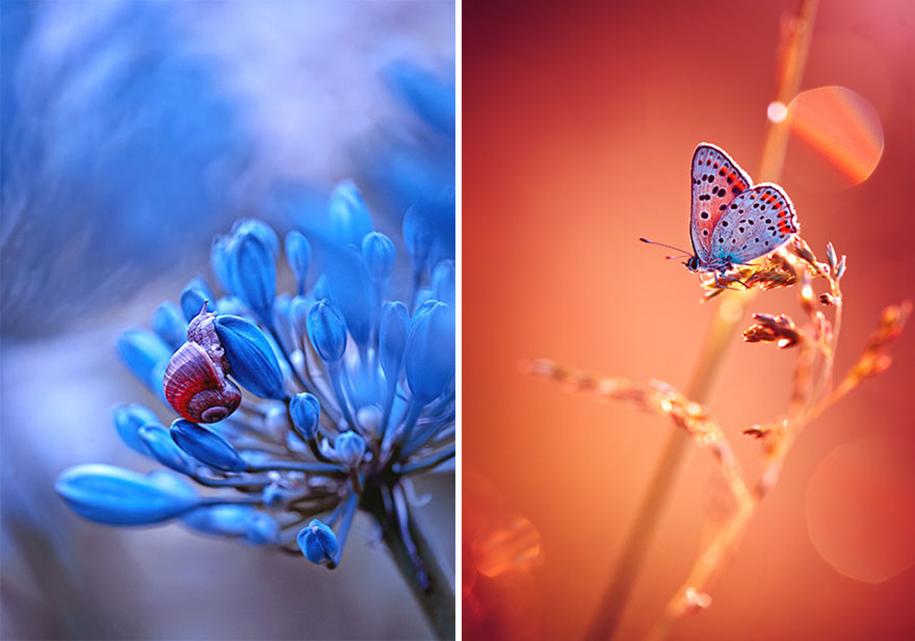 nature-wonderland-photography-magda-wasiczek-poland-7