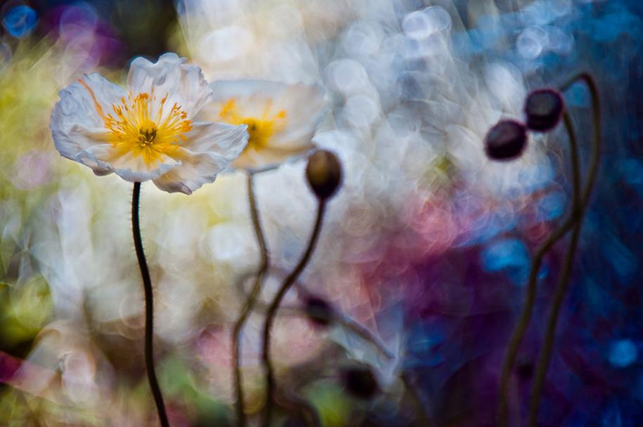 nature-wonderland-photography-magda-wasiczek-poland-8