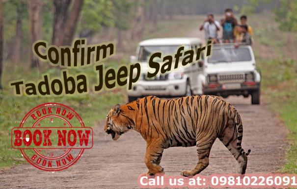 Confirm tadoba jeep safari booking
