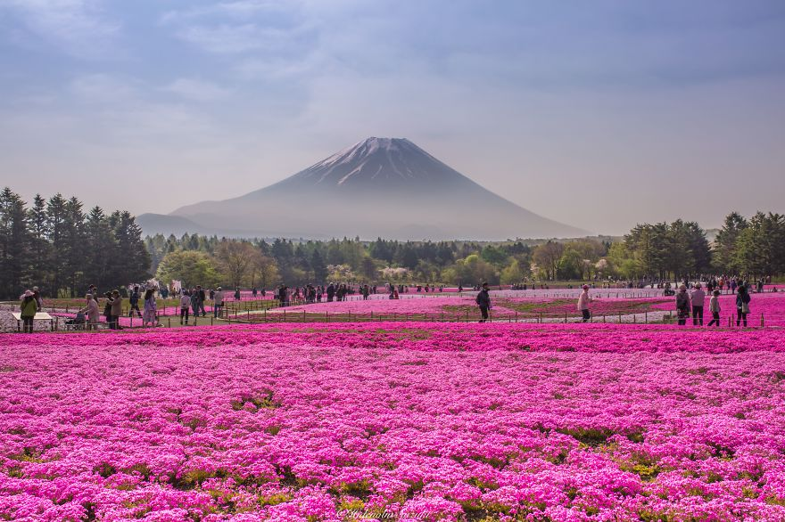 beautiful-places-tourist-attractions-japan-5