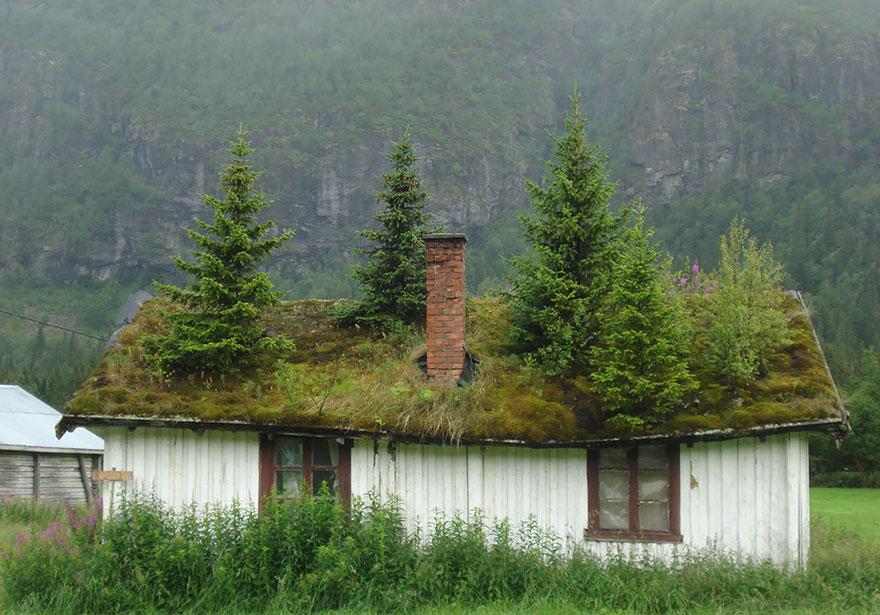 10 Hobbit Like Scandinavian Houses With Green Roofs