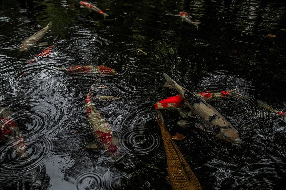 japan-rainy-season-photography-hidenobu-suzuki-10