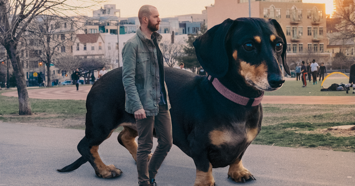 Photographer makes his wiener dog as big as she thinks she is for What are the best dogs in the world