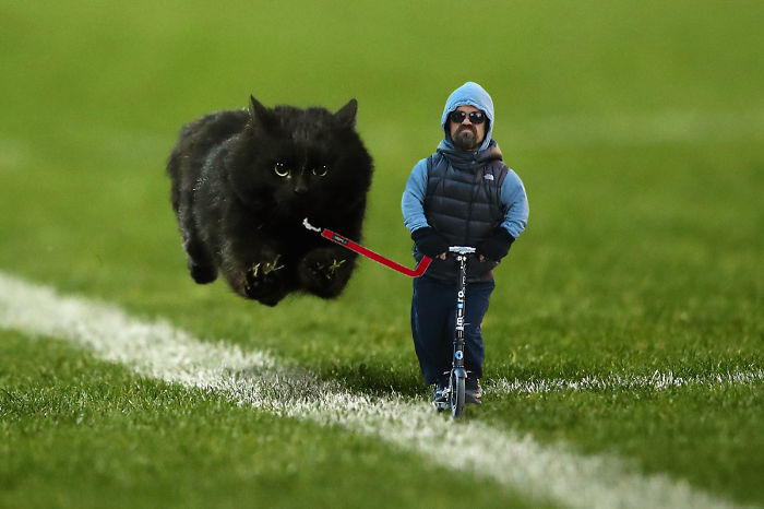 flying-rugby-cat-photoshop-battle-13