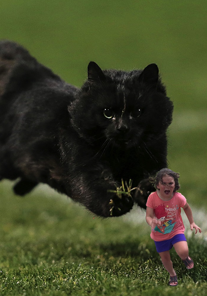 flying-rugby-cat-photoshop-battle-14