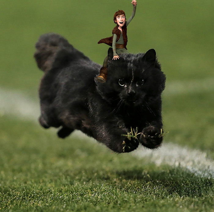 flying-rugby-cat-photoshop-battle-3