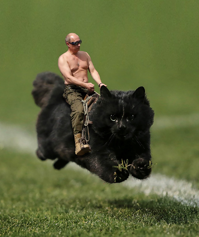 flying-rugby-cat-photoshop-battle-4