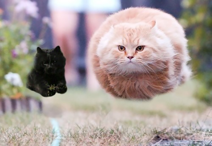 flying-rugby-cat-photoshop-battle-7