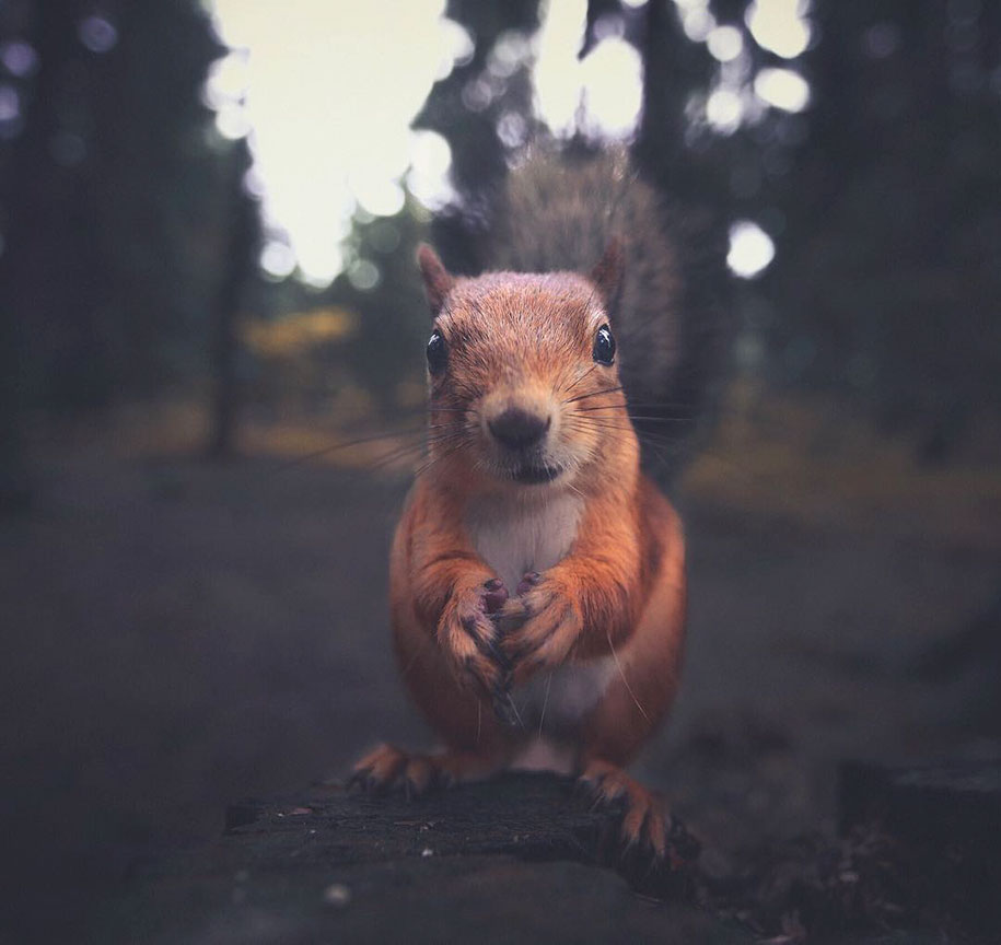 Young Photographer Creates A Bond With Wild Animals To Get