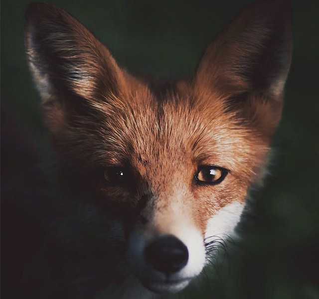 Young Photographer Creates A Bond With Wild Animals To Get ...