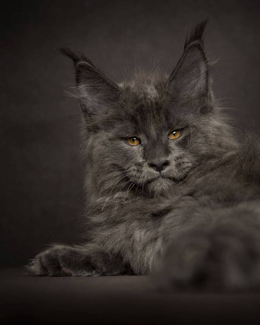 what is the scientific name of cat