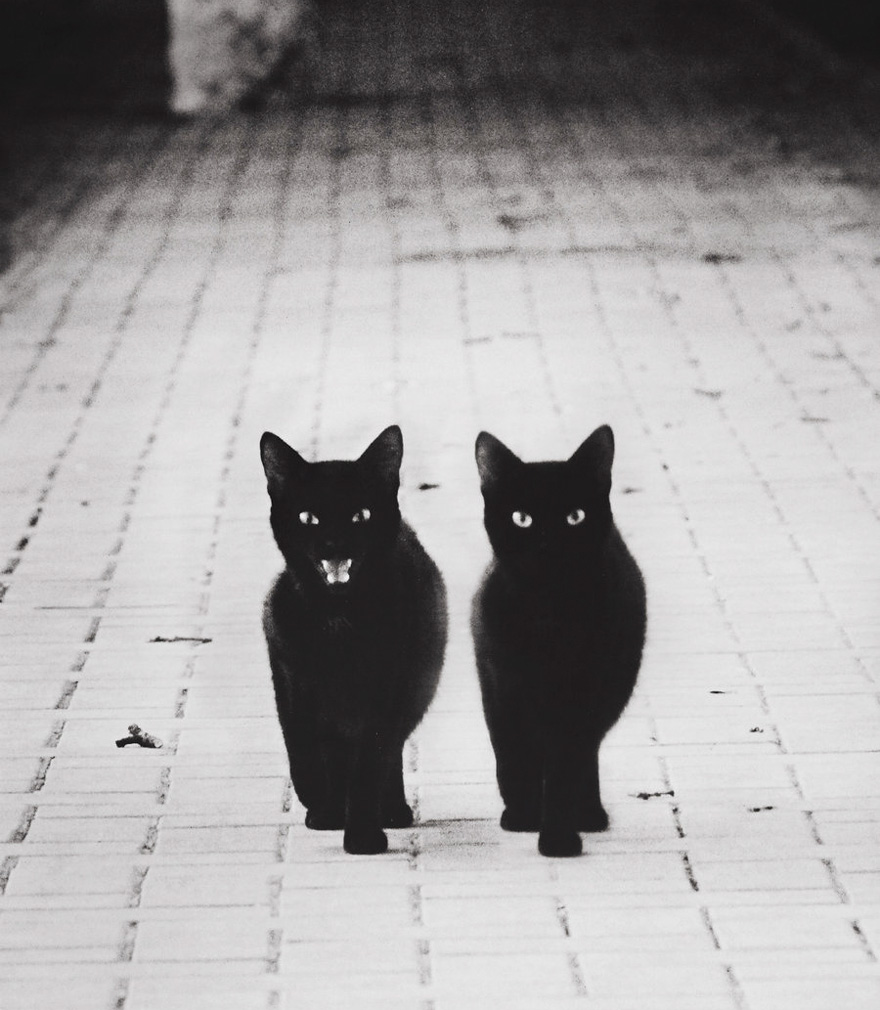 mysterious-cats-black-and-white-portraits-11: www.demilked.com/mysterious-cats-black-and-white-portraits