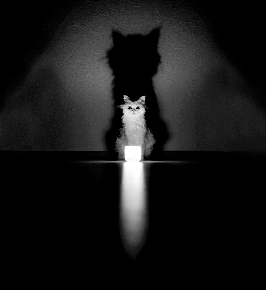 Mysterious cats black and white portraits 14