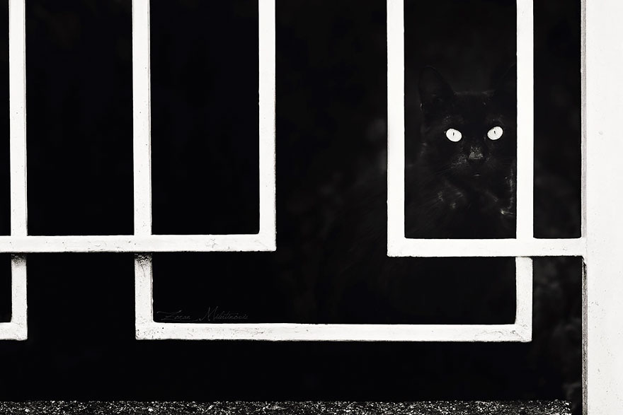 mysterious-cats-black-and-white-portraits-3: www.demilked.com/mysterious-cats-black-and-white-portraits