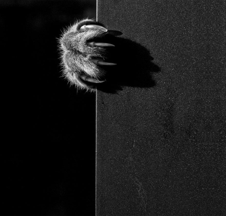 mysterious-cats-black-and-white-portraits-6