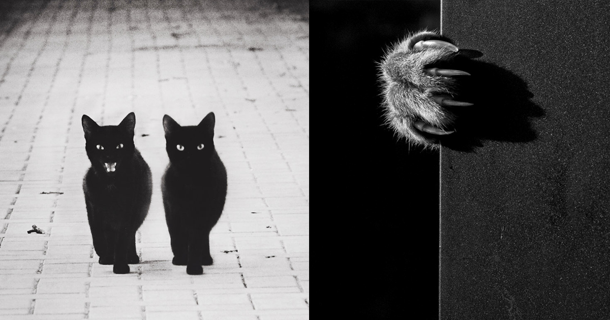 mysterious-cats-black-and-white-portraits-raw.png: www.demilked.com/mysterious-cats-black-and-white-portraits