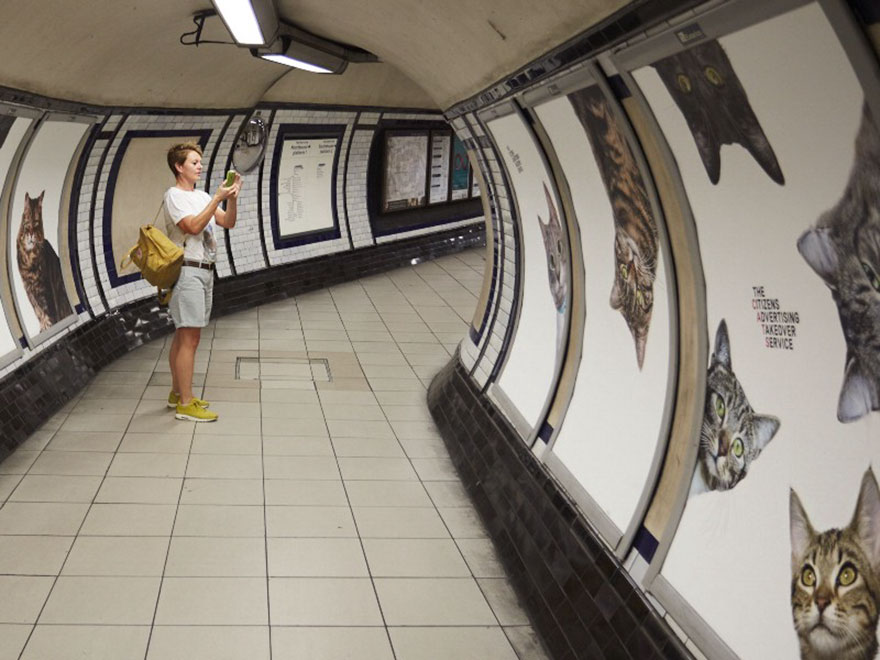 subway-cat-ads-metro-london-underground-1